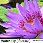 20+ Rare Flowers Name in Hindi With Picture।फूलों के नाम
