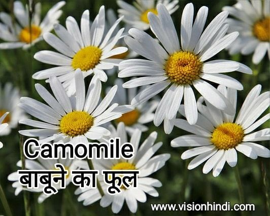 60+ List Of Rare Flowers Name in Hindi With Picture