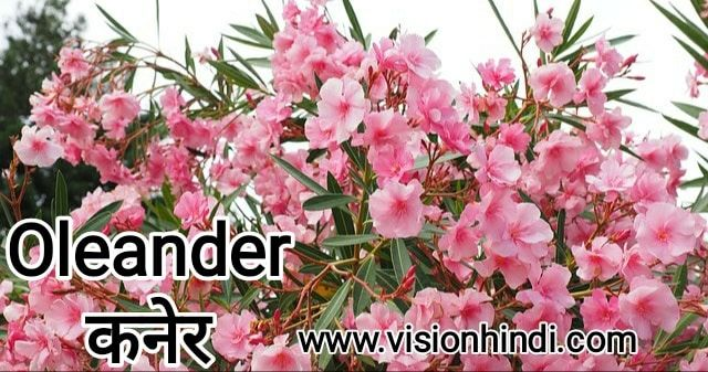 20+ List Of Rare Flowers Name in Hindi With Picture