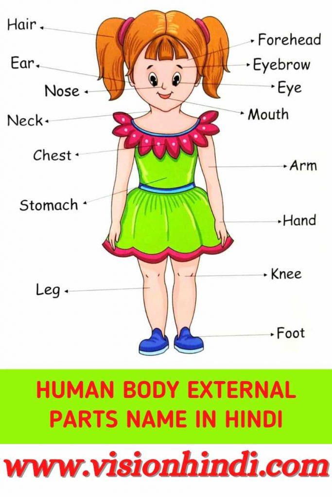 Human body parts name in hindi And English
