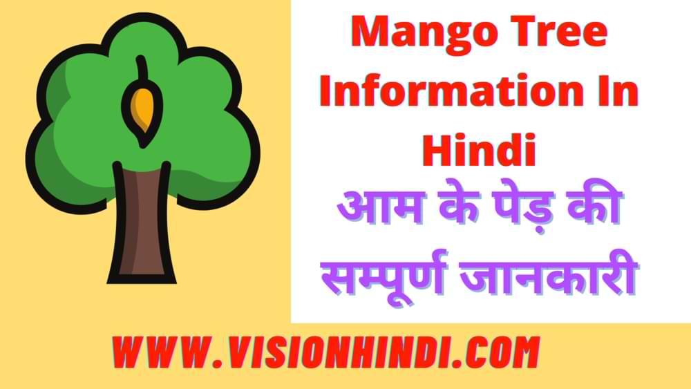 Mango Tree Information In Hindi - आम के पेड़ की सम्पूर्ण जानकारी